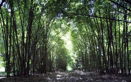 ed_21_bambu_002