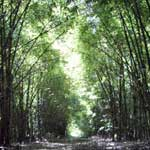 sm_bambu
