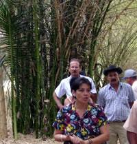 bambu_biomasa_004.jpg