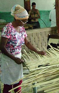 bambu_biomasa_006.jpg
