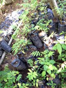 Viveros de la red EcoSur en Nicaragua